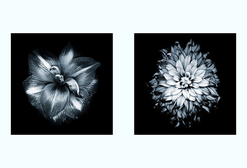 Water Reflection Art Print Set