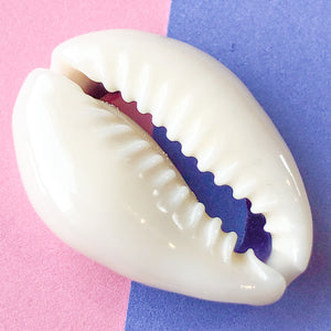 Backless Cowrie Shell - 10-Pack