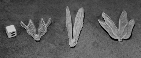 Reaper Miniatures 77582: Transparent Wings (3)