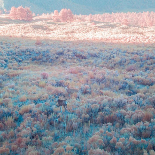 Pastel land forest trees fashion tumblr pinterest inspiration