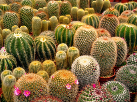 Colourful cactus garden - Tumblr - Inspiration - Ellis and Friends