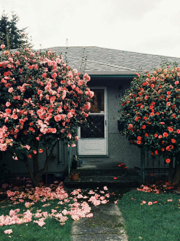 House with flower garden