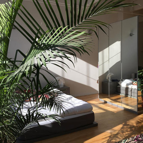 Palm tree plant in bedroom interior inspiration