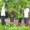Cocoa Carers training others to prune