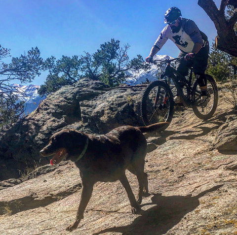 Mountain Biking with a dog