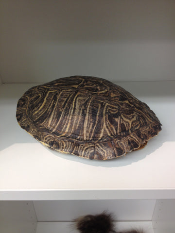 Turtle  (Red Ear Turtle) - PrimalAttitude.com