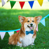 How to throw an amazing birthday party for your dog!