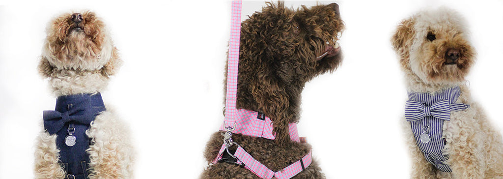 Dog Harness for dog