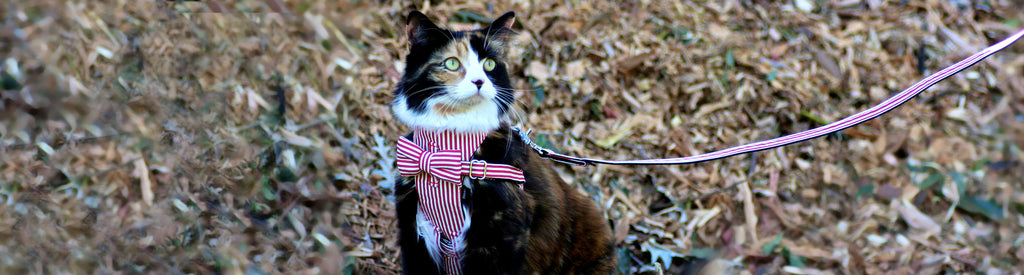 cat-harness-leash-set-collection-banner