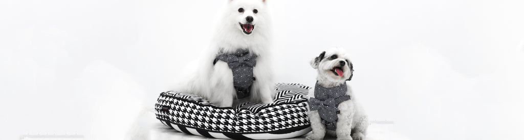 dog-harness-collection-banner