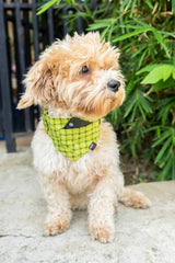 Dog Bandana, Collar and Leash Set - GREEN SQUARES