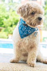 Dog Bandana and Collar with Inbuilt Pocket – BLUE PAISLEY