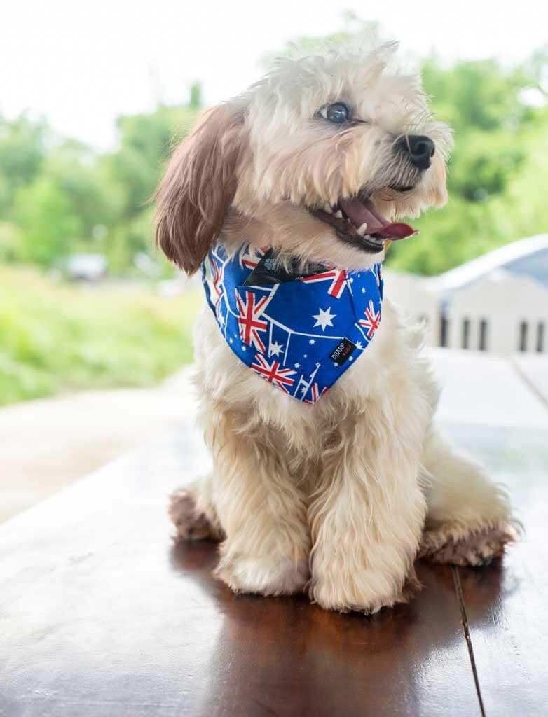 Dharf dog bandana in Australian flag fabric