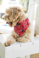 Dog Bandana, Collar and Leash Set - Red Paisley