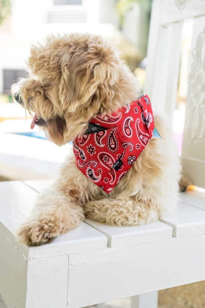 Dog Bandana and Collar - Pocket Front – Red Paisley - Dharf - 4