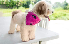 Dog Bandana - Pocket Front – PINK FUCHSIA
