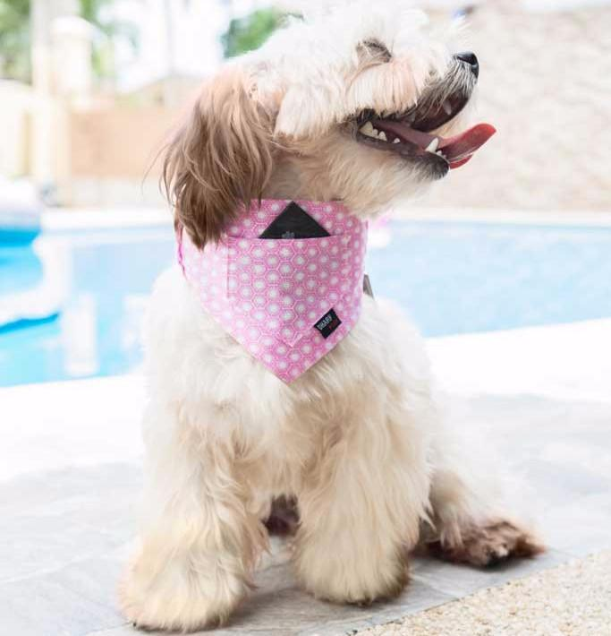 Dog Bandana - Pocket Front – PINK SUNRISE - Dharf - 2