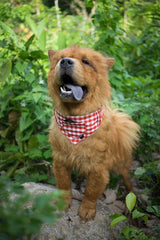 Dog Bandana and Collar - Inbuilt Pocket – RED CHECKS