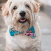 NEW Dog Bow Tie and Collar Set: Summer Blossom In Turquoise