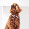 Dog Bow Tie and Collar Set: Candy Canes