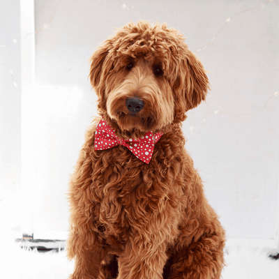 Dog Bow Tie and Collar Set: Metallic All That Glitters