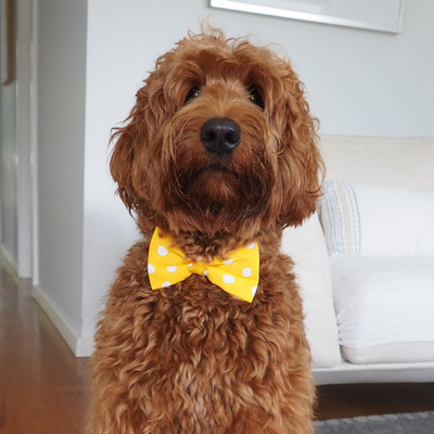 NEW Dog Bow Tie and Collar Set : A Little Piece Of Sunshine