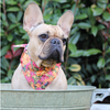 NEW Dog Bandana and Collar : AUTUMN FLOWERS