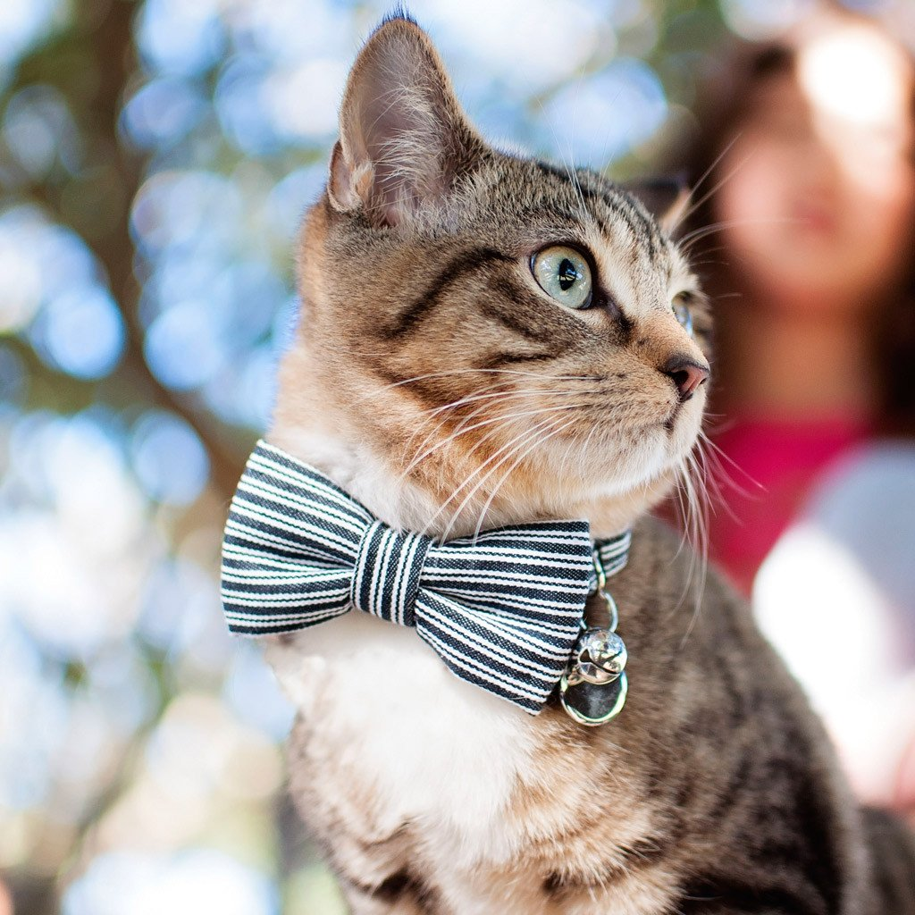 Dharf cat bow tie collar in black pinstripes