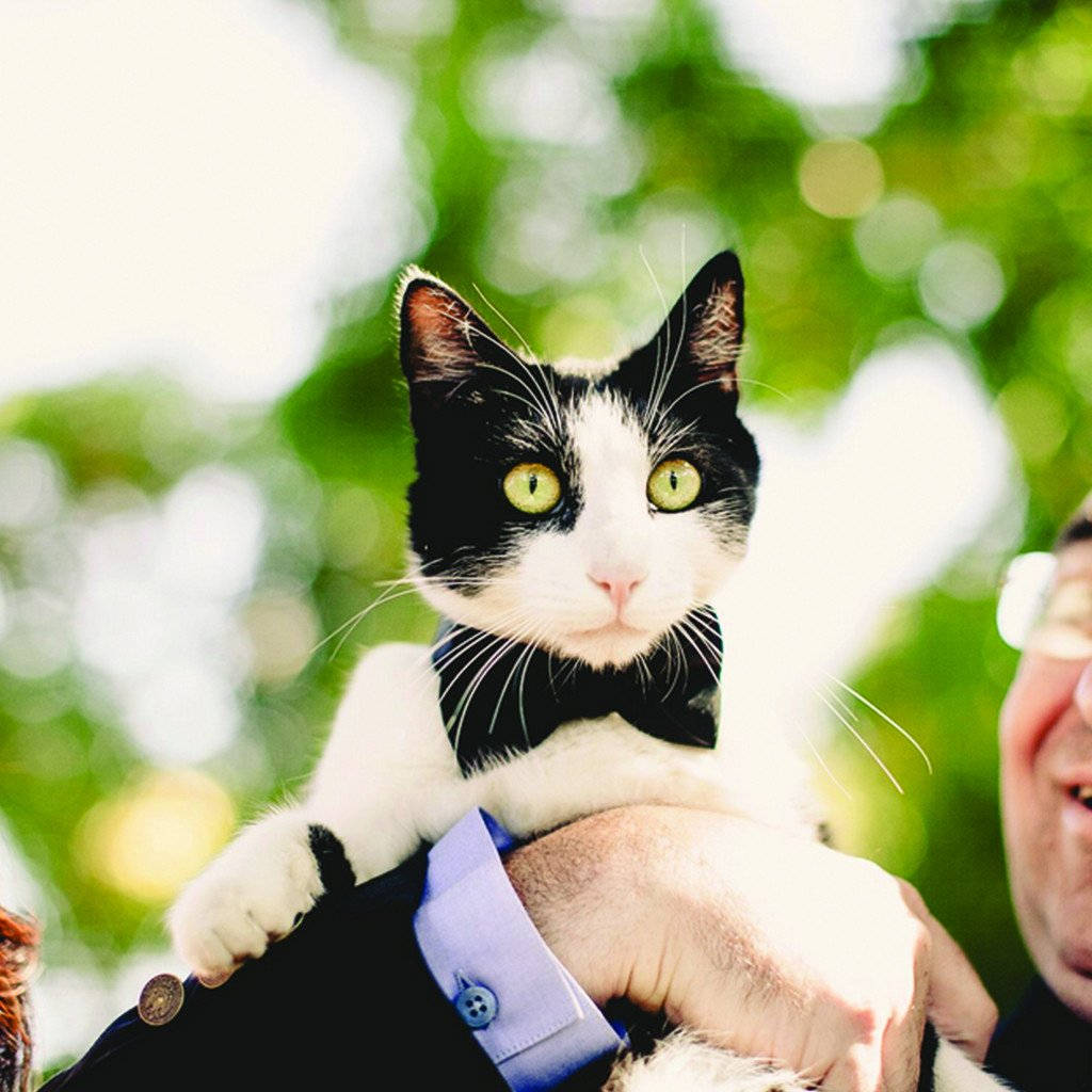 Dharf adjustable cat collar and removable bow tie in black