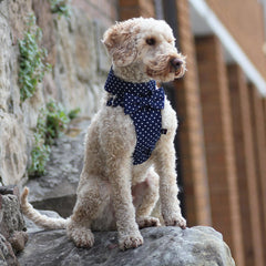 Dog Bow-tie Harness & Leash :  Blue Polka