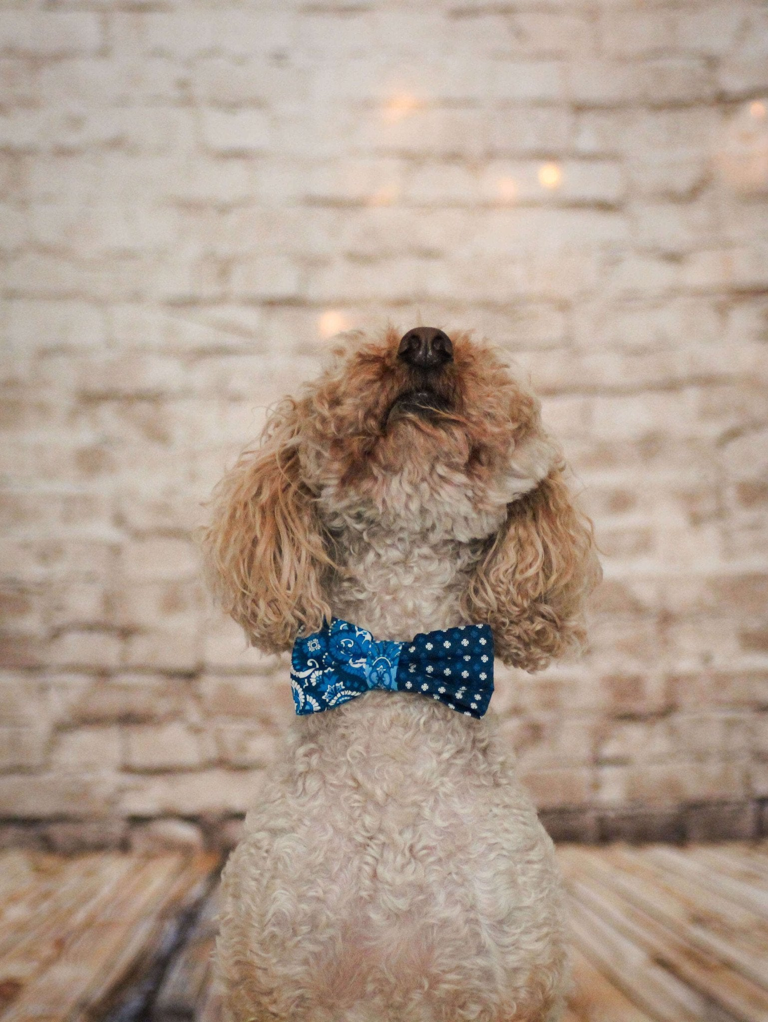 Dog Bow Tie and Collar Set : Blue Mix and Match - Dharf - 5