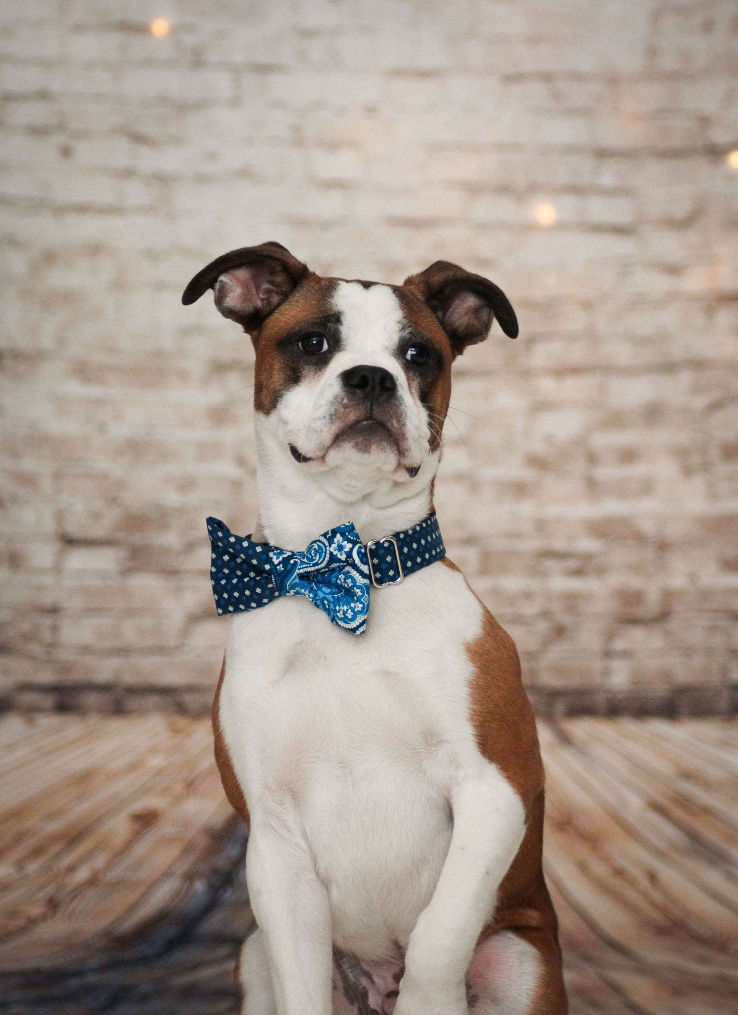 Dog Collar, Bow tie and Leash Set : Blue Mix and Match - Dharf - 3