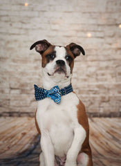 Dog Bow Tie and Collar Set : Blue Mix and Match