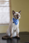 Dharf cat bandana and collar set in blue paisley with breakaway buckle