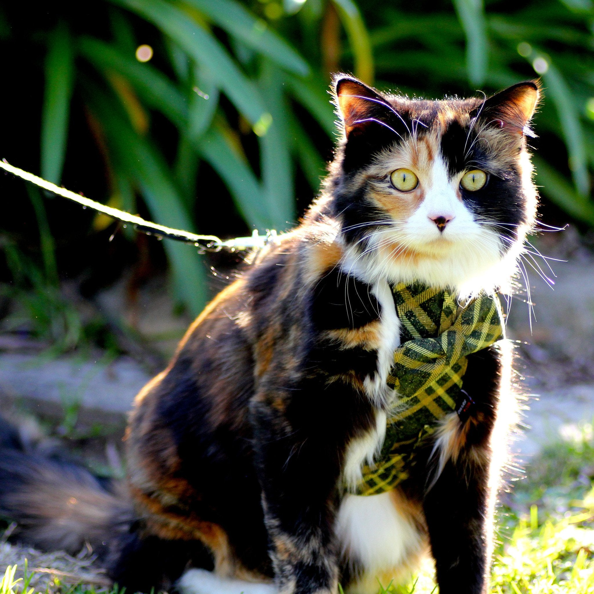 Cat Bow-tie Harness & Leash : Green & Gold Tartan - Dharf - 2