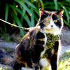 Cat Bow-tie Harness - Green and Gold Tartan - Dharf - 2