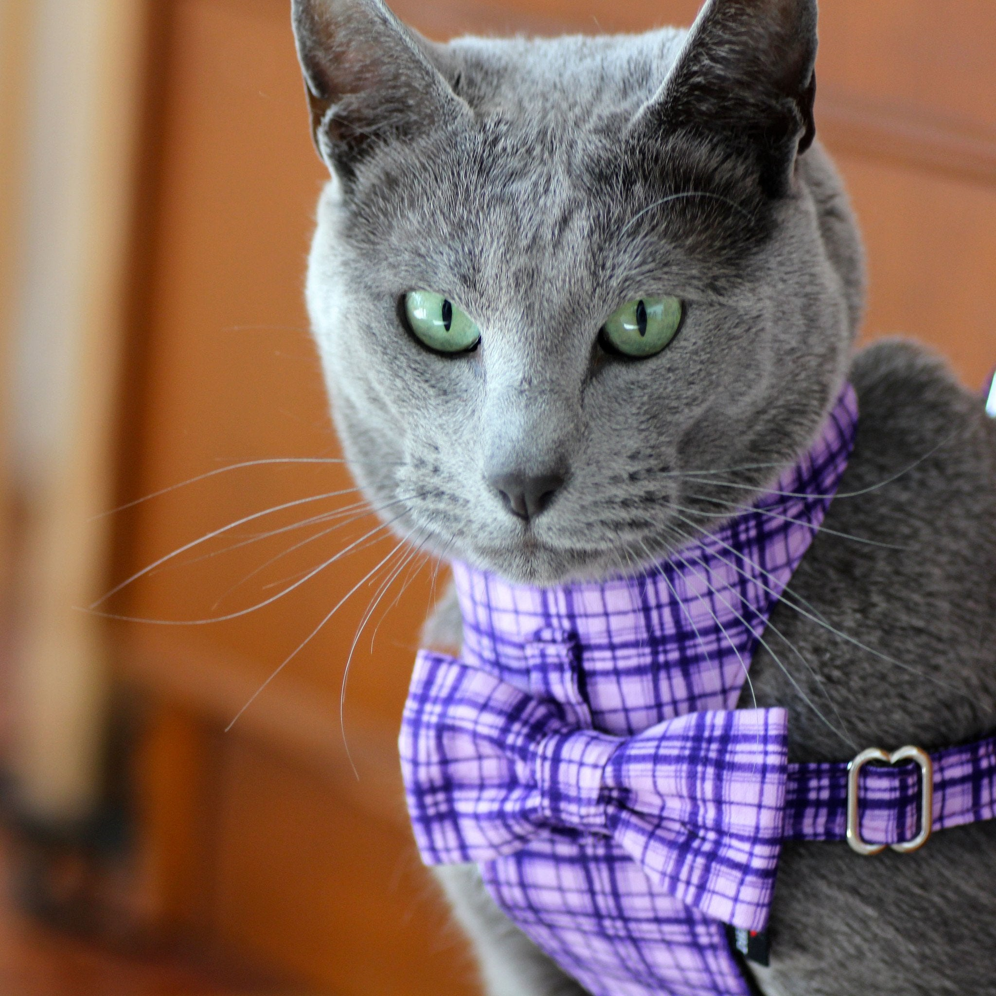 Cat Bow-tie Harness - Purple Criss-Cross - Dharf - 2