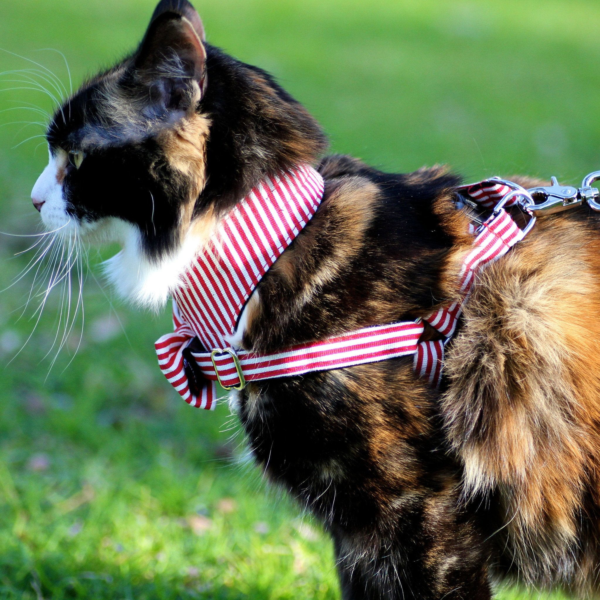 Dharf matching cat bow tie harness set in red and white stripes