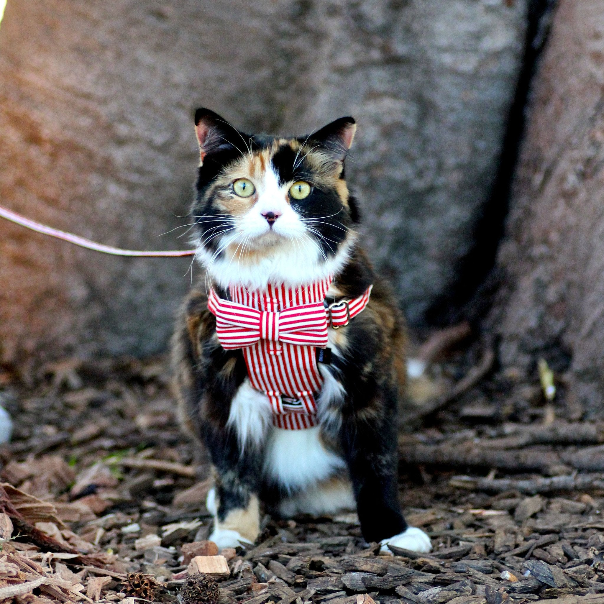 Dharf cat harness and removable bow tie in red and white stripes