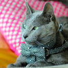 Cat Bow-tie Harness - Black & White Hexagon - Dharf - 2