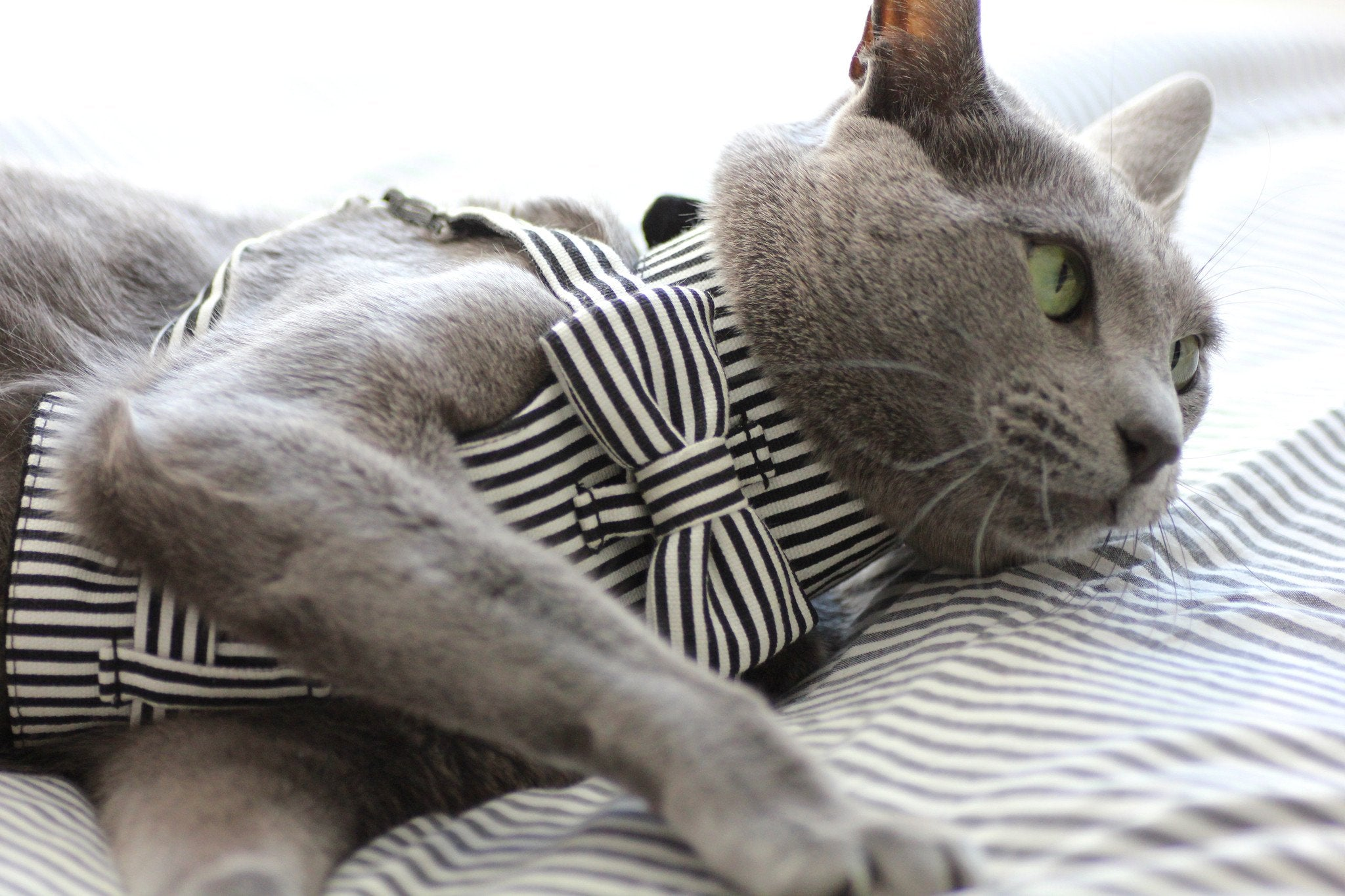 Dharf cat harness with adjustable straps in black and white stripes