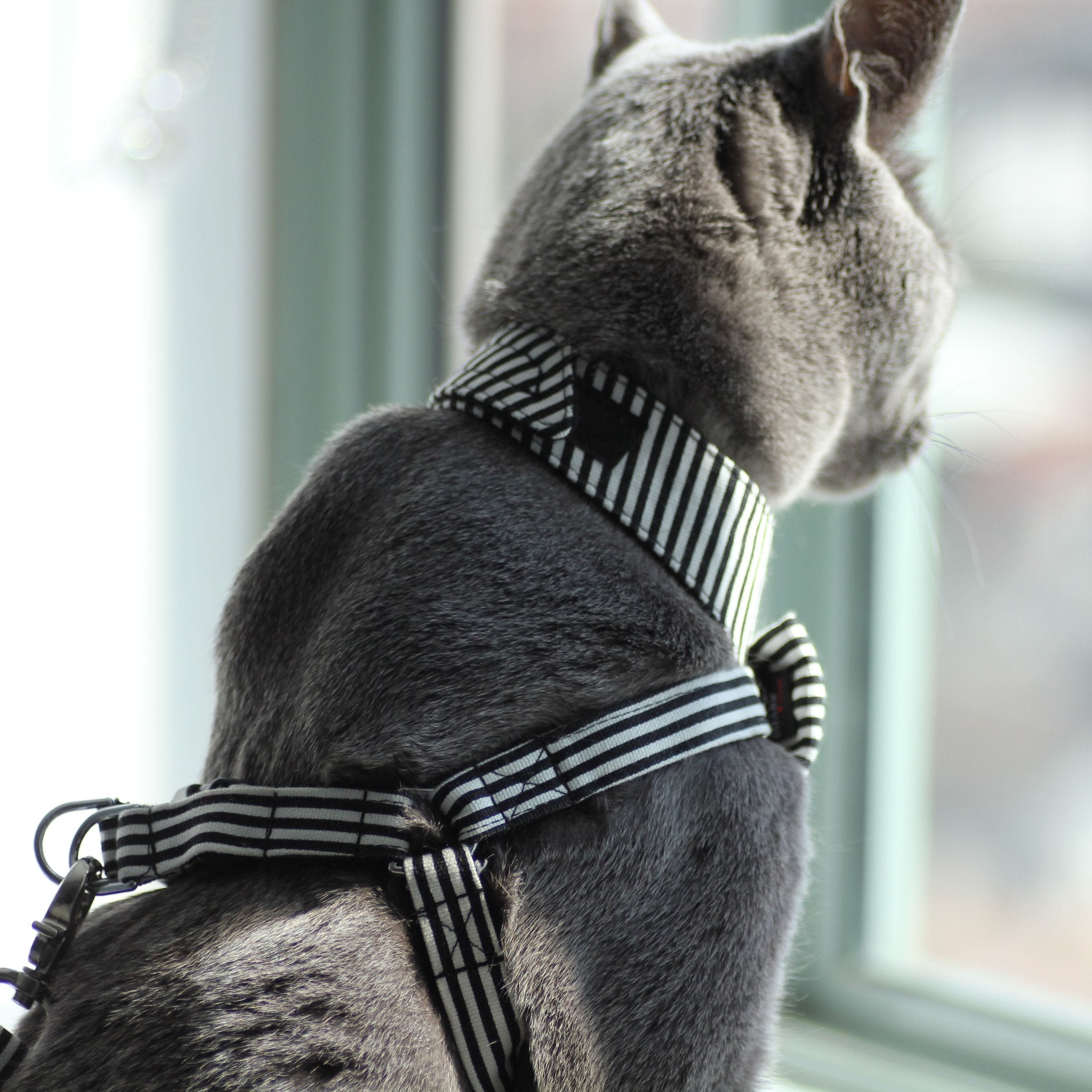 Cat Bow-tie Harness & Leash : Black & White Stripes - Dharf - 4