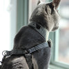 Dharf luxury cat harness with adjustable straps in black and white stripes