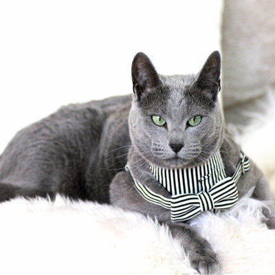Dharf cat harness and removable bow tie in black and white stripes