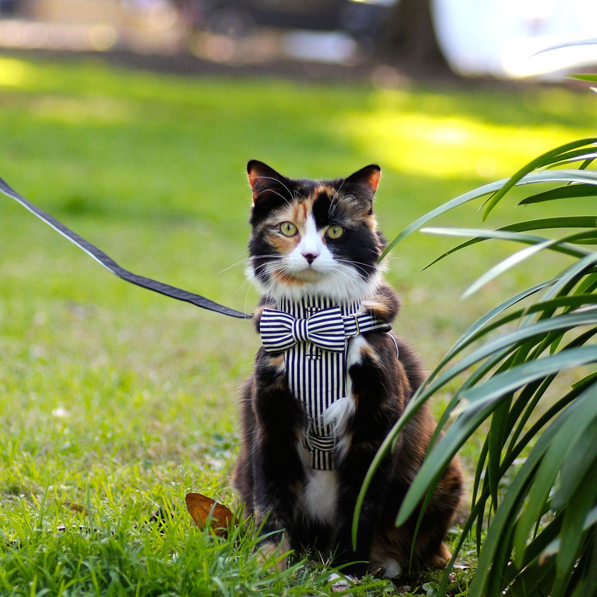 Cat Bow-tie Harness & Leash : Black & White Stripes - Dharf - 3
