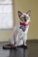 Cat Bandana & Collar:  Scottish Tartan