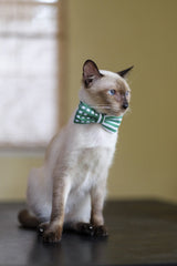 Cat Collar and Bow Tie :  Green Mix and Match
