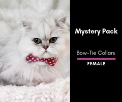 Mystery Cat Bow-Tie Collar 2 Pack: Female
