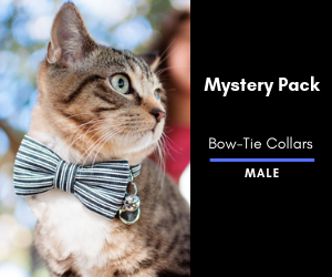 Mystery Cat Bow-Tie Collar 2 Pack: Male