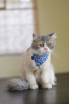 Dharf removable cat bandana and adjustable collar in blue paisley